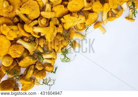 Full Frame Studio Shot Of Fresh Yellow Delicious Wavy Autumn Vegetarian Chanterelle Mushrooms And Gr
