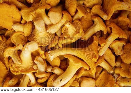 Full Frame Shot Of Fresh Yellow Delicious Wavy Vegetarian Chanterelle Mushrooms For Sale In A Outdoo