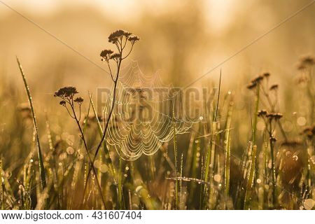 Spider web on a meadow grass early in the morning sun. Sunrise in the field covered with fog. Spider web with dew drops in morning sunlight close-up