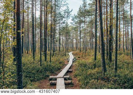 Wooden path in the colorful autumn tundra forest Ruska season in Finland