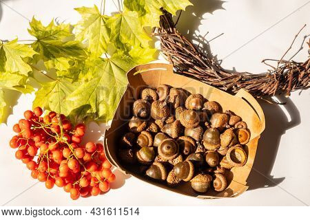 Natural Autumn Decor Of Leaves, Acorns And Mountain Ash. Creation Of A Handmade Wreath. Concept Of T