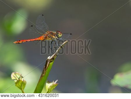Dragonfly On The Grass Near The River In The Summer