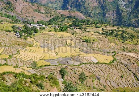 Typical mountain Agricultural landscape of Nepal