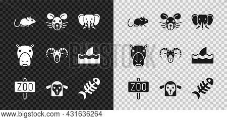Set Rat, Head, Elephant, Zoo Park, Sheep, Fish Skeleton, Hippo Or Hippopotamus And Head Of Goat Ram