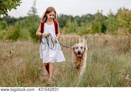 Little girl with golden retriever dog walking in the field in summer day together. Child with doggy pet portrait on meadow