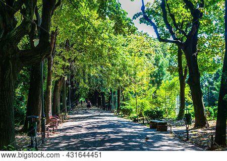 View Of Cismigiu Garden, Public Park With Tree Lined Paths. Cismigiu Park In Bucharest, Romania, 202