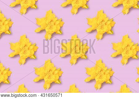 Repetitive Pattern Made From Head Of Yellow Narcissus Flowers On A Purple Pastel Background.