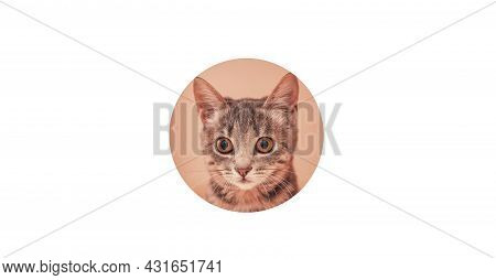 Funny Grey Cat Looks Through Ripped Circle Hole In White Paper Background. Copy Space.