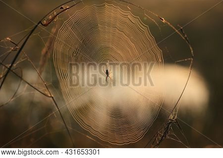 Spider on web in morning steppe