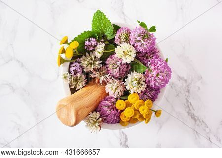 medical flowers herbs in mortar. alternative medicine. clover tansy thyme melissa
