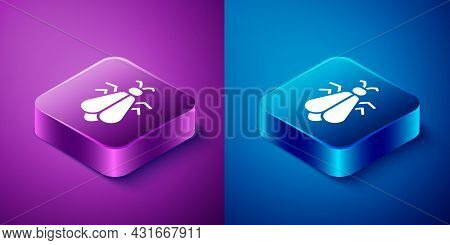 Isometric Mosquito Icon Isolated On Blue And Purple Background. Square Button. Vector