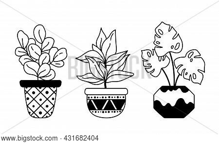 Monstera, Fig Tree Home Plants, Potted Boho Houseplants Isolated Clipart Bundle, Black And White Flo