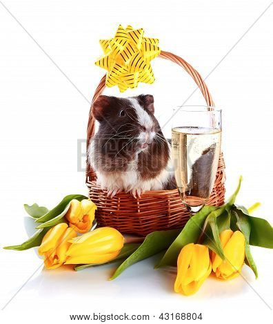 Guinea Pig In A Basket With A Bow, Flowers And A Champagne Glass.