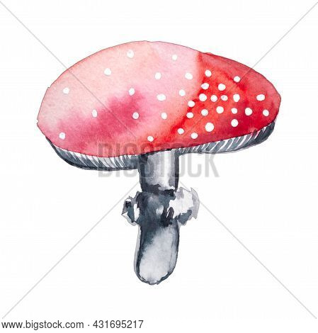 Red Watercolor Mushrooms With White Dots. Amanita Fly Agaric Mushroom Isolated On White