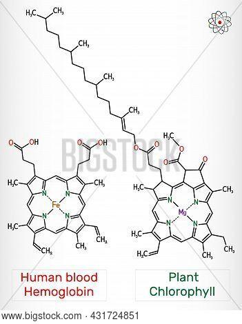Plant Chlorophyll And Human Blood Hemoglobin (heme B, Haem B) Molecule. Skeletal Chemical Formula.