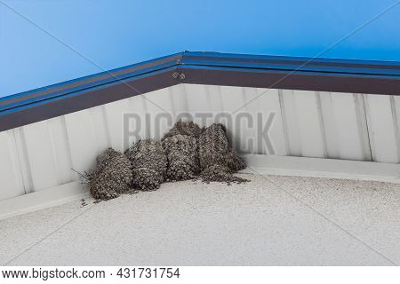 Bird's Nest Swallows Under The Roof Of The House Against The Blue Sky.