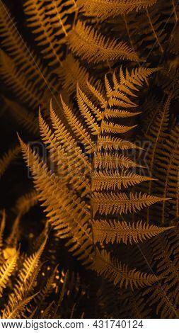Autumn Ferns Leaves Background. Dark Yellow Foliage Natural Floral Pattern. Vertical Smartpone Stori