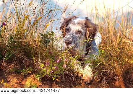 White And Black Fuzzy Dog Puppy In Green Grass And Flowers, Low Angle View, Freedom Travel Concept,