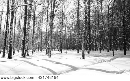 Deep February Snow Drifts In Sunny Weather Black And White