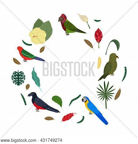 Design Template With Parrots In Circle For Kid Print. Round Composition Of Tropical Birds Macaw, Kea