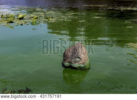 Blooming Green Water With Stones. Chemical And Biological Contamination Of Water. Wastewater. Pollut