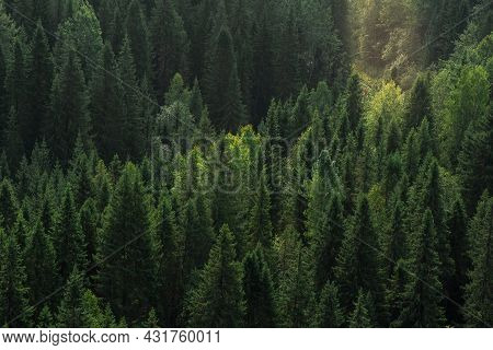 Mountain Forest Landscape With Sunrays, Top View