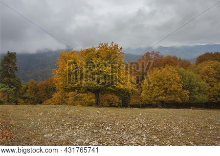 A Beautiful Landscape With An Autumn Forest. Trees With Bright Colorful Foliage, Deciduous Autumn Fo
