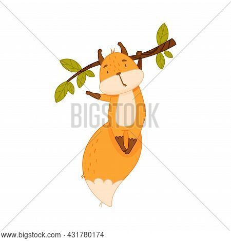 Funny Orange Squirrel Character With Bushy Tail Hanging On Tree Branch With Its Paw Vector Illustrat