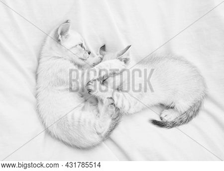 Share Love. Cozy Home. Small Cute Kittens Relax On White Sheets. Baby Cat. Cute White Kittens. Tende