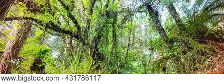 New Zealand tropical jungle forest. Green natural background