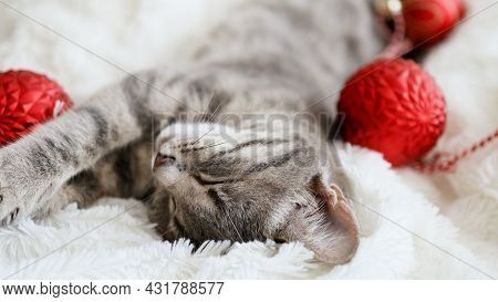 Tabby Grey Cat With Christmas Red Balls In Comfortable Bed On A Blanket. Kitten Relaxes