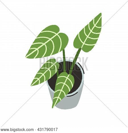 Potted House Plant With Large Green Leaves. Indoor Foliage Houseplant Growing In Planter. Modern Lea