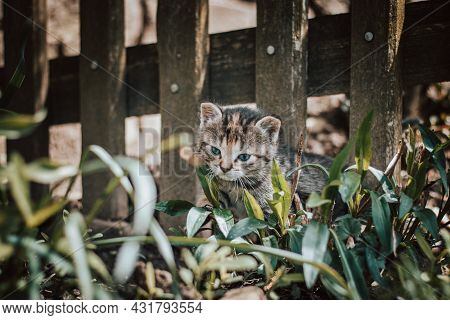 Young Curious Man Walks Around The Fence And Cautiously Steps On It. A Newborn Cat Discovers The Wor