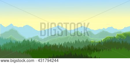 Pine Forest. Silhouettes Of Coniferous Trees. Morning. Wild Landscape Horizontally. Nice Panoramic V