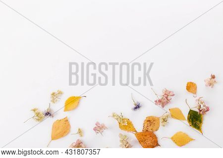Autumn Composition Made Of Autumn Dry Multi-colored Leaves On White Wooden Background. Autumn, Fall