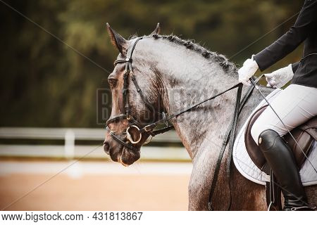 Portrait Of A Beautiful Gray Horse With A Braided Mane And A Rider In The Saddle, Which Performs In