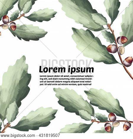 Green Oak Leaves And Acorns. Oak Crown. California Red Oak Branch. A Branch Of A Deciduous Tree.