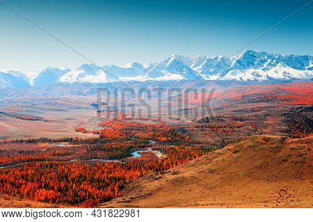 Yellow Trees And Snow-covered Mountain Peaks. Kurai Steppe And View Of North-chuya Mountain Ridge In