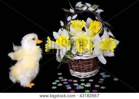 ducking with daffodils in basket