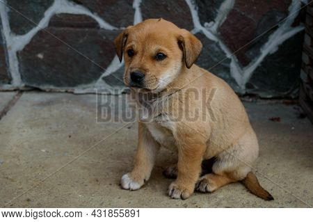 Lonely Little Puppy With Sad Eyes Close-up Outside Near A Wall Of A House On A Concrete Looks Aside.