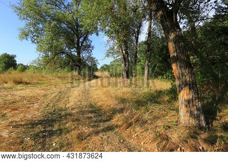 Landscape with rural road across sunny meadow among tree in autumn day