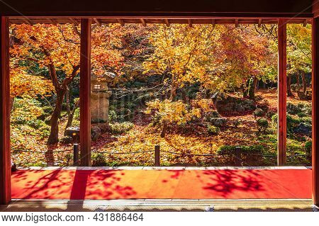 Frame Between Wooden Pavilion And Beautiful Maple Tree In Japanese Garden And Red Carpet At Enkoji T