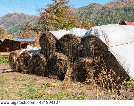 Haystacks Are Stacked In A Row. Autumn View, Close-up. Chemal, Altai Republic, Russia.
