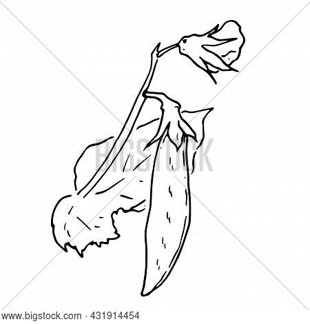 Vector Set Of Pea Plants. A Sketch-style Part Of A Pea Plant With Leaves And Flowers Of A Pea Pod, I