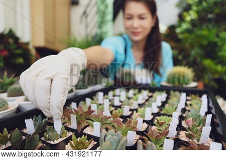 Femal Agriculturist Sitting Among Small Plant And Adding Name Tag On Mini Cactus In Small Pot For Cl