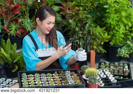 Beautiful Asian Woman Wears Apron And Using Smartphone Taking Photos Of Small Cactus In White Pod Wi