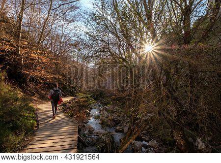 Girl Walking Through Wooden Walkway Walk At Faedo De Cinera Beech Forest And River, Wooden Footbridg