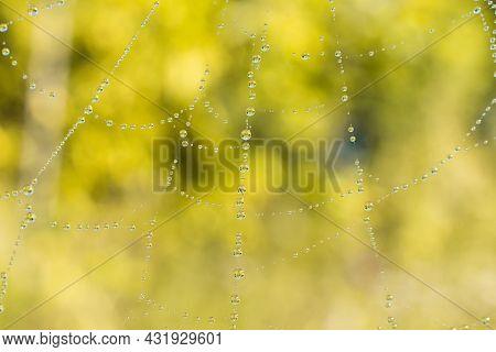 Cobweb Or Spiderweb Natural Rain Pattern Background Close-up. Cobweb With Drops Of Rain Pattern In B