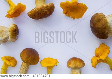 Studio Shot Of Isolated Fresh Yellow Delicious Wavy Autumn Vegetarian Chanterelles And White Boletus