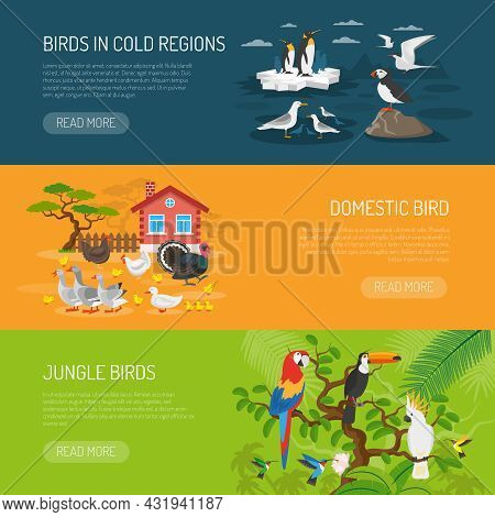 Flat Horizontal Banners Set Of Birds In Cold Regions Domestic Birds And Jungle Birds Vector Illustra